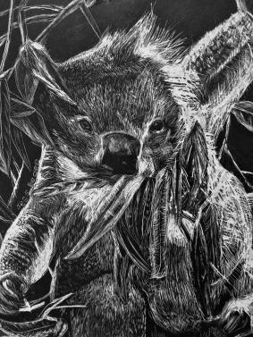 Illustration_Koala